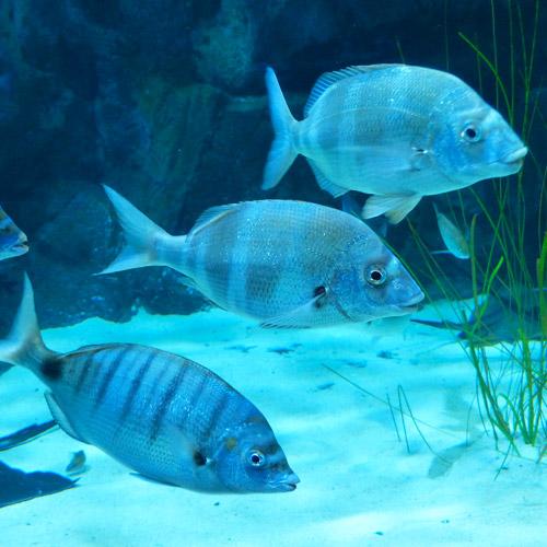 balık alerjisi